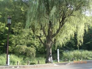 秋田旅行2カヤの樹