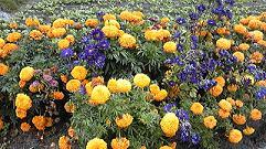 道端の派手で大きい花