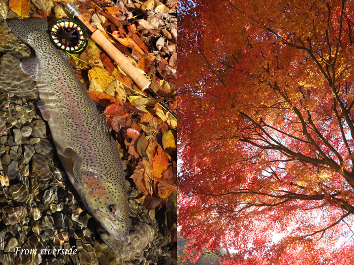 紅葉とハコスチ