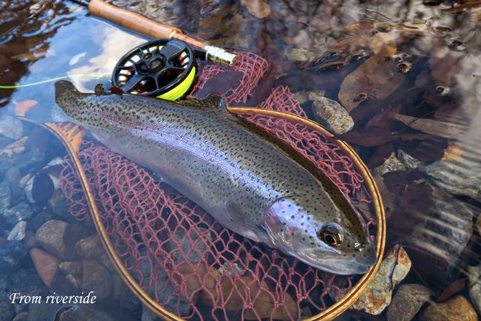 2016釣り納め
