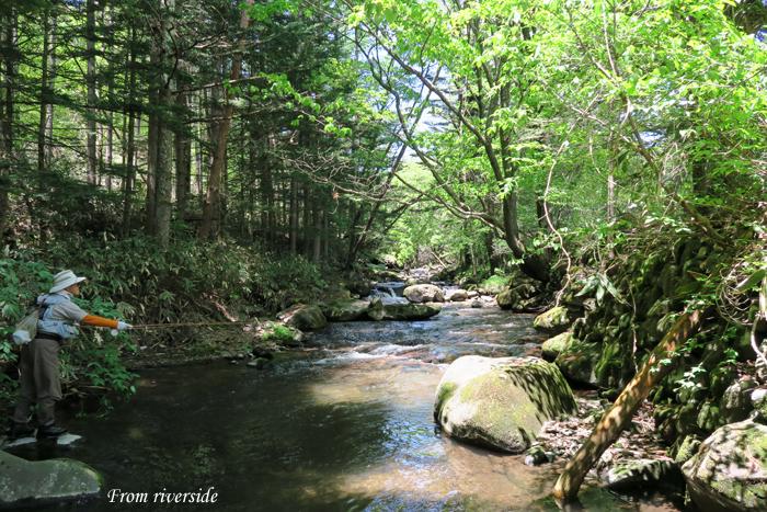新緑の嬬恋の渓