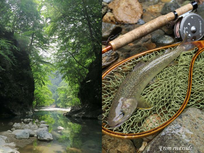 夏の溪とイワナ