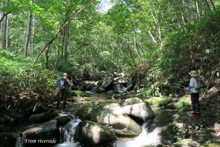 森の中の溪