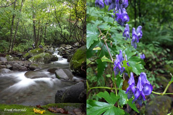 初秋の溪と毒花