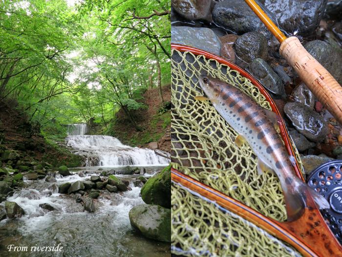 増水の溪とヤマメ