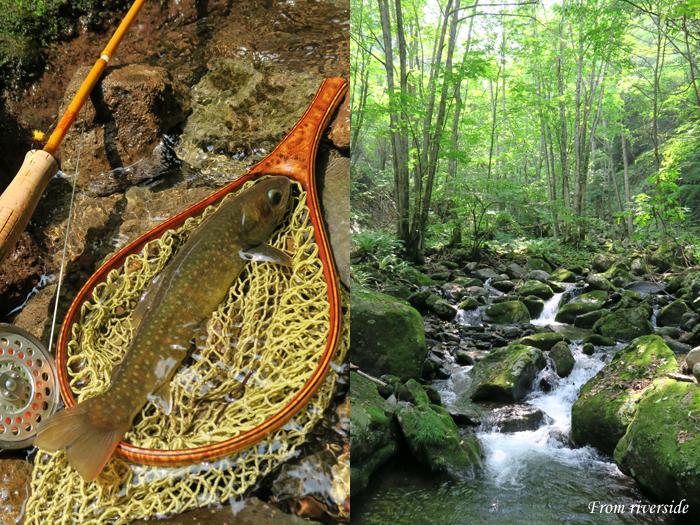 森の溪のイワナ