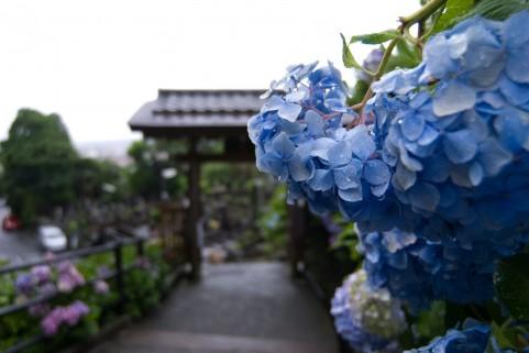 梅雨時の神社