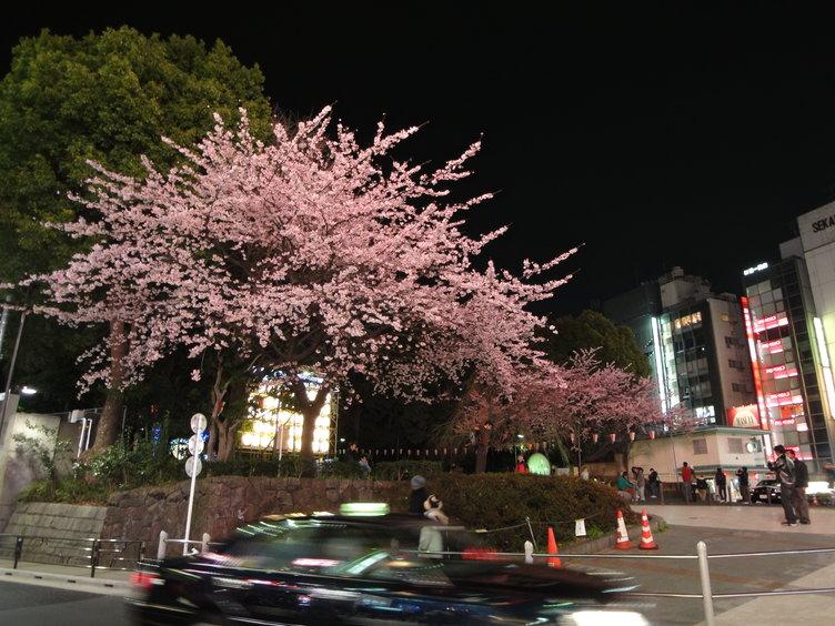 上野夜桜1