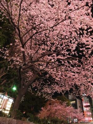 上野夜桜2