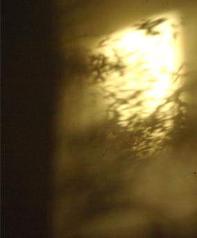 shadow_4.jpg