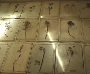 botanicalspecimen.jpg