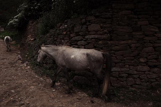 Bhutan_2.jpg