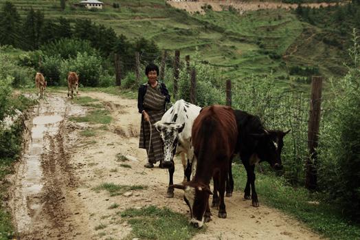 Bhutan_37.jpg