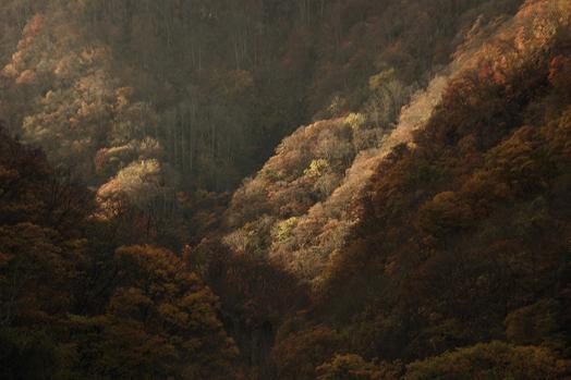 autumn_3.jpg