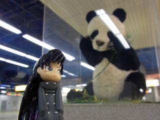 パンダにガンを飛ばす?