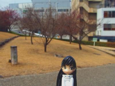 舞鶴城公園の梅