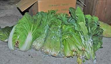 なずな農園の野菜達