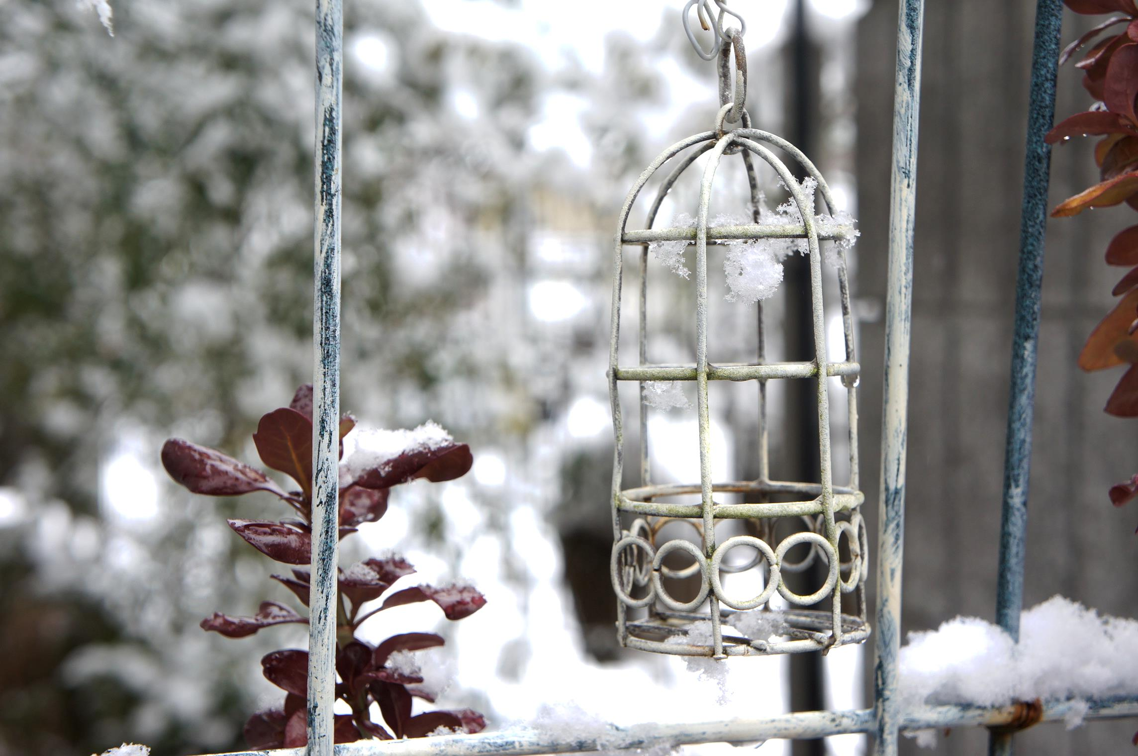 ガーデン 雪 庭