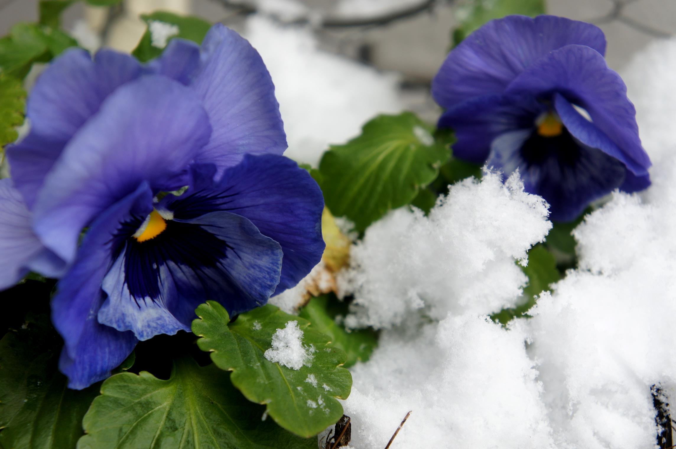 ガーデン 雪 花