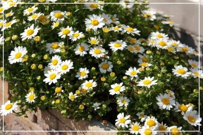 春 花 我が家 庭 花壇