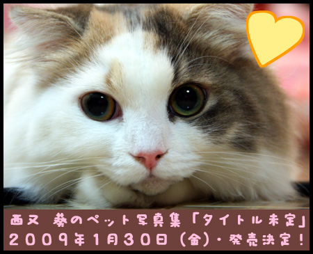 「西又 葵といぬねこ20匹(仮)」2009年1月30日発売!
