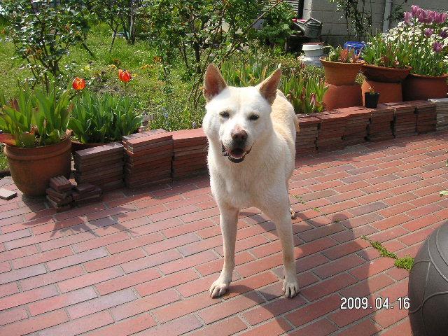 愛犬 リサ1