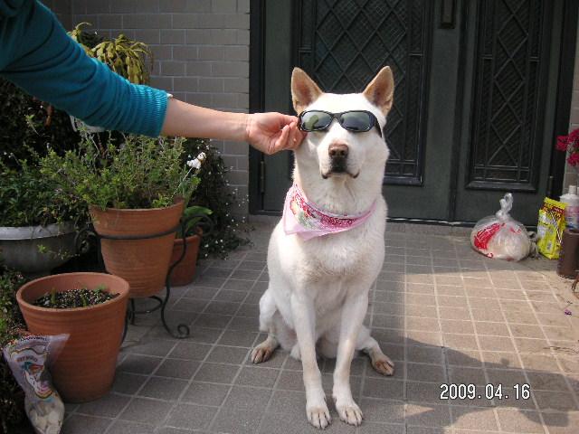 愛犬 リサ2