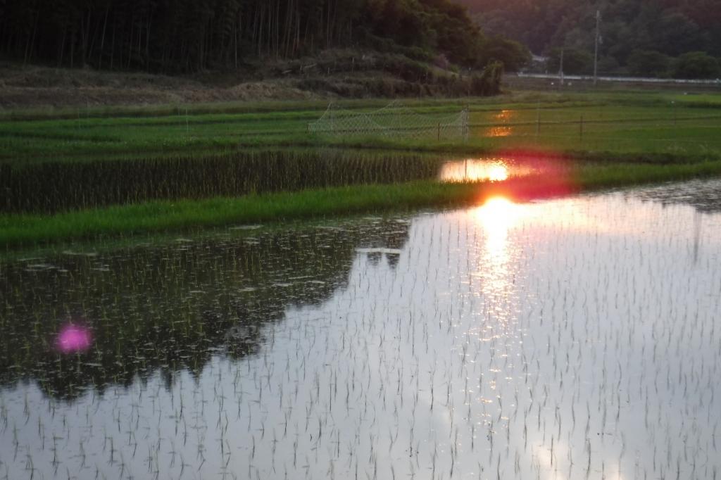 田んぼと夕日