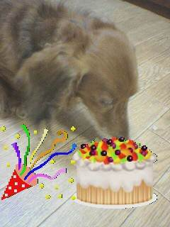 ジーニー誕生日