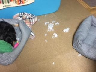おもちゃ破壊
