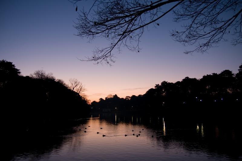 大宮公園の夜明け