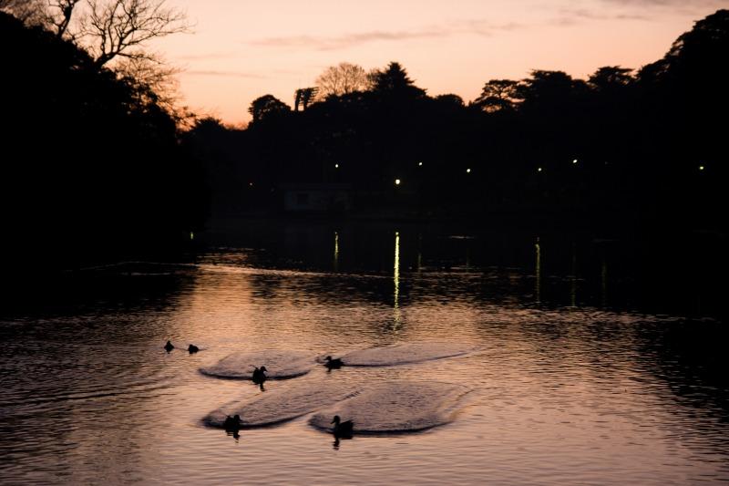 大宮公園の夜明け2