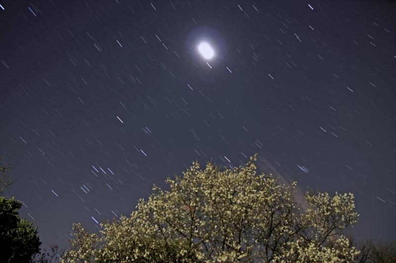 梅とオリオン座・月