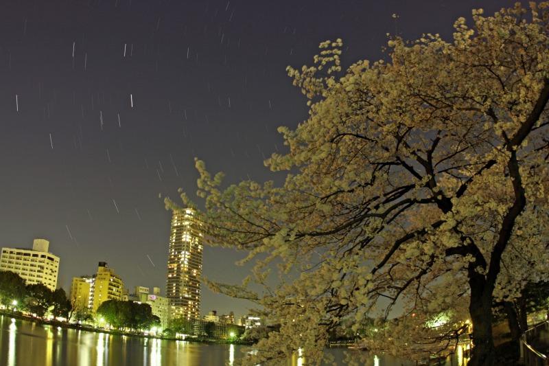 上野不忍池の桜と星空1