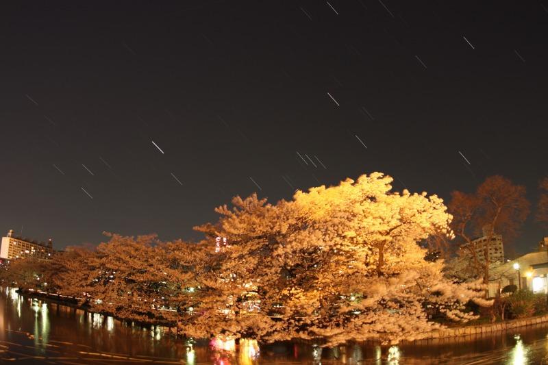 上野不忍池の桜と星空2
