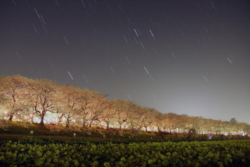 桜・菜の花・星空の競演☆沈む冬の星達1
