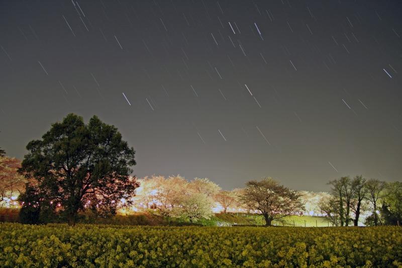 桜・菜の花・星空の競演☆沈む冬の星達2