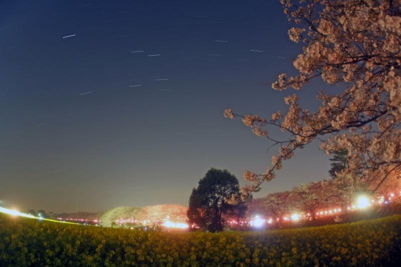 桜・菜の花・星空の競演☆春の星座達1