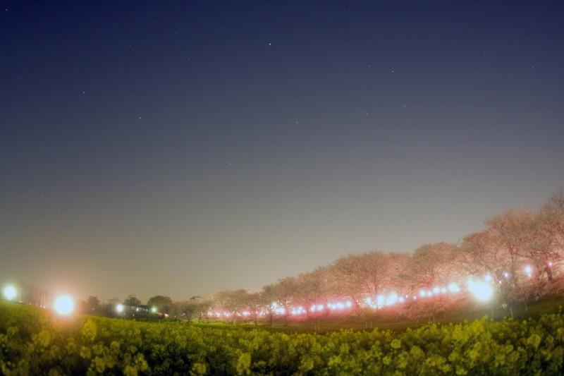 桜・菜の花・星空の競演☆春の星座達2