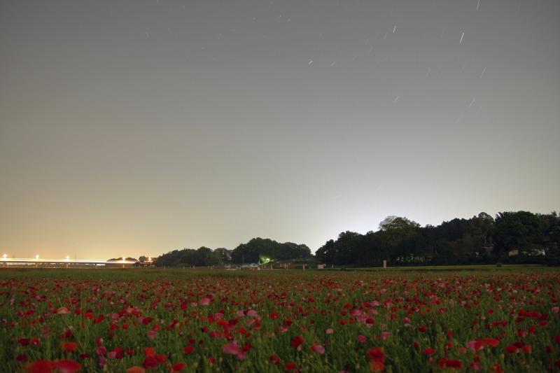 ポピー畑と星空1