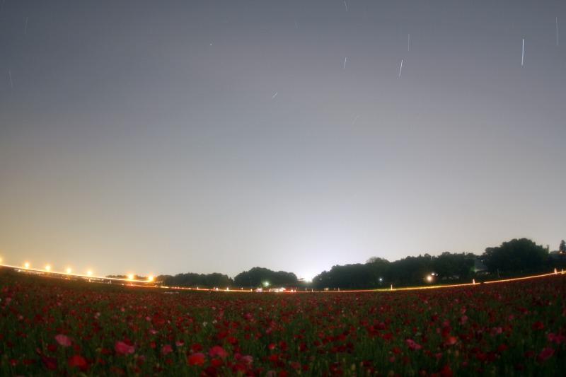 ポピー畑と星空3