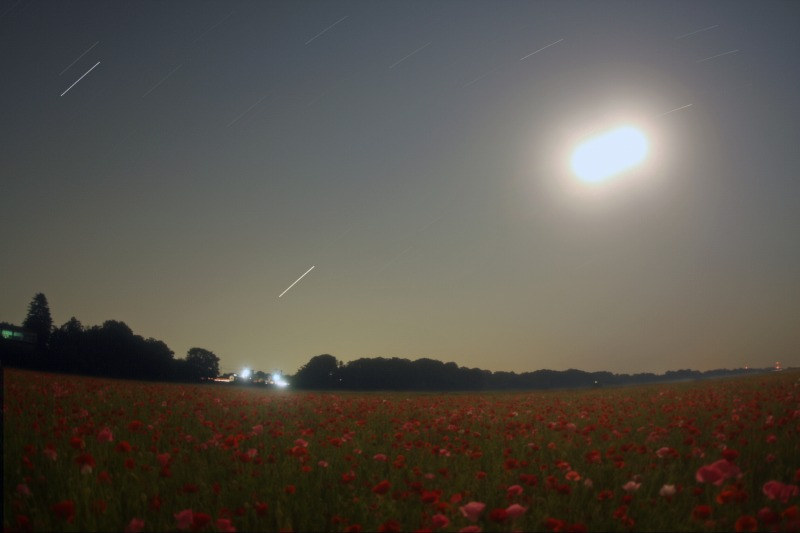 ポピー畑と星空・月