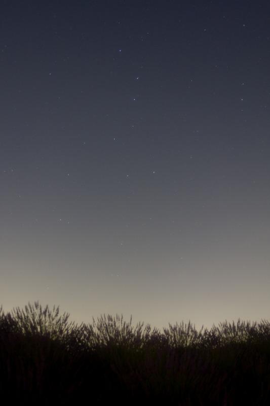 ラベンダーと北斗七星