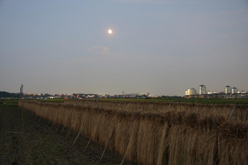 はさ掛けの田んぼと中秋の名月