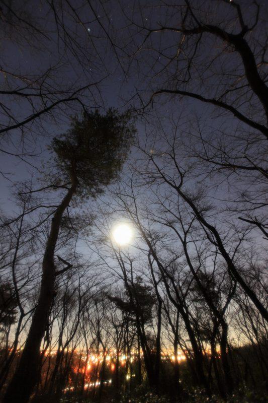 森の中の月景色