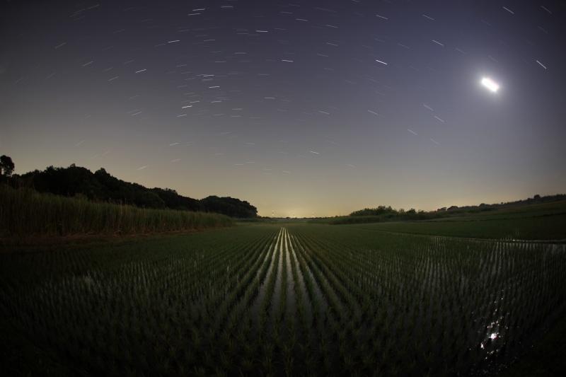 田んぼと星空