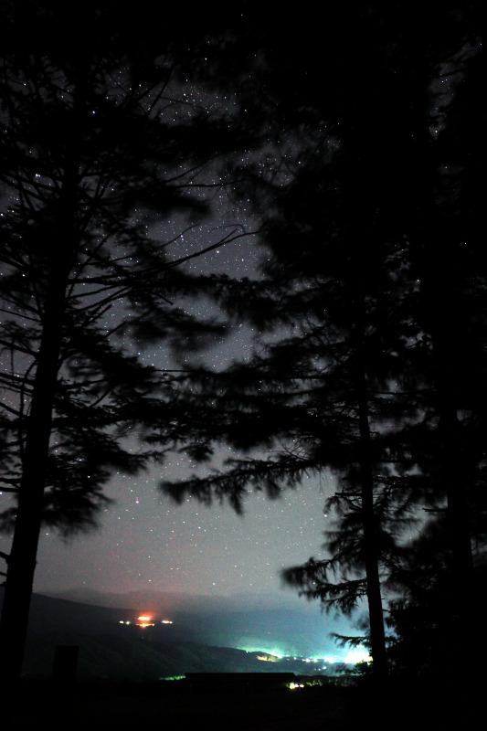 森の中からキャベツ畑を望む
