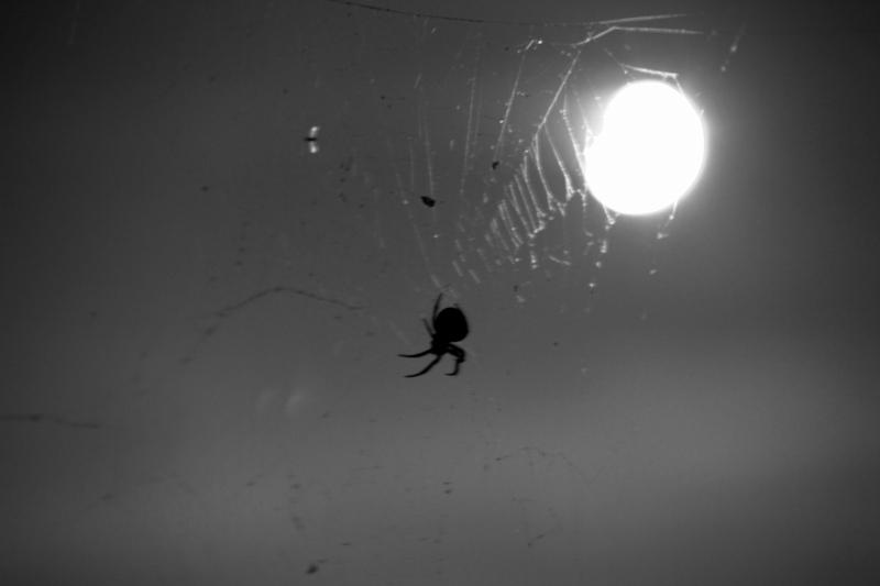 蜘蛛の巣にかかった月