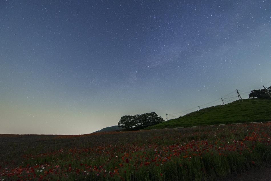 秩父高原牧場天空を彩るポピーと星空