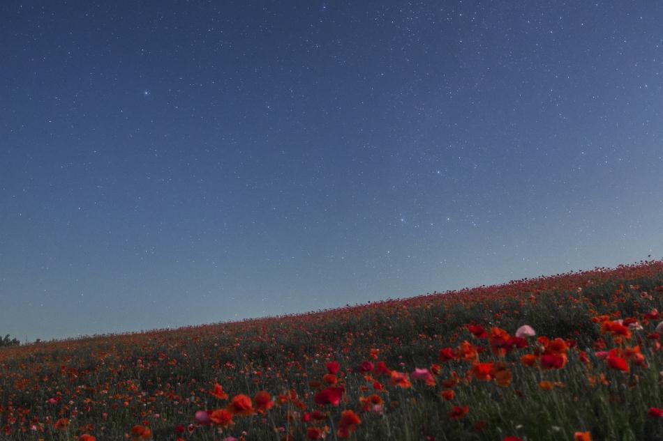 ポピー畑と北極星・カシオペア座